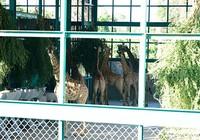 Vinpearl Safari Phú Quốc đón 200 thú quý hiếm