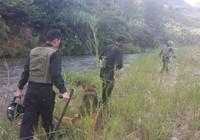 Công an lo tên cướp taxi trốn trong rừng gặp nguy hiểm