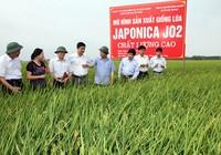 Lấy gạo Nhật làm thương hiệu gạo Việt?