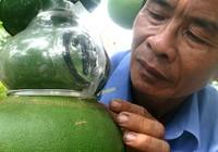 Bưởi hồ lô Việt 'so găng' thần tài Trung Quốc