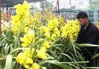 Hoa độc Đà Lạt, kiểng lạ miền Tây chinh phục khách Sài Gòn