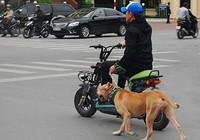 Để chó nuôi cắn người: Phải bồi thường