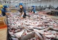 Thêm 22 doanh nghiệp Việt được xuất cá tra vào Mỹ