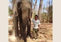 Ký sự rừng sâu - bài 3: Những 'chiến binh' giải cứu voi rừng