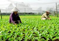 Nhân rộng các cơ sở sản xuất, kinh doanh thực phẩm an toàn