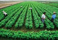 Hơn 500 dự án ngoại đầu tư vào nông nghiệp Việt Nam