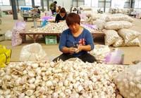 Việt Nam chi hơn 10 tỉ đô nhập hàng hóa Trung Quốc trong ba tháng