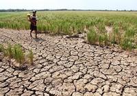Thủy điện trên sông Mekong lợi ít, hại nhiều
