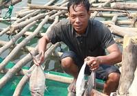 Cá biển chết do nhiễm độc?