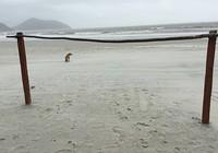 Bãi biển đẹp… để dành