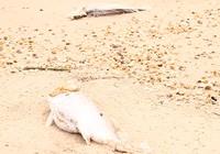 Phá hại môi trường: Phải xử nghiêm!