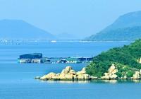 Người quyết liệt chống dự án thép chục tỉ đô ở Vịnh Vân Phong