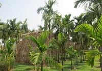 Nhớ Sài Gòn… khi ở Sài Gòn