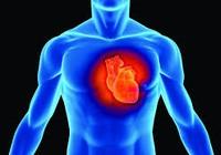 Nhiều cơ, ít mỡ tốt cho tim