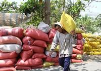 Thái Lan xả kho gạo khổng lồ, gạo Việt 'nín thở'