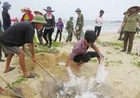 Vụ cá chết trên sông Bưởi: Tham mưu chưa kịp thời