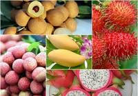 Nhiều loại trái cây tăng giá, không đủ hàng xuất khẩu