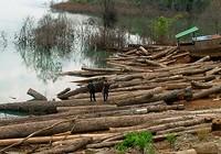 Kiểm lâm nổ súng bắt gỗ lậu, một kẻ phá rừng tử vong