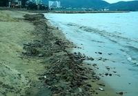 Bùn đen, xà bần xuất hiện dày đặc ven biển Quy Nhơn