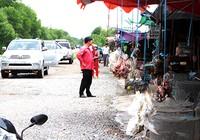 Bất lực trước nạn bày bán chim trời