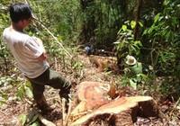 Truy bắt trùm phá rừng thủy điện Đồng Nai 5