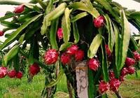 Xuất khẩu nhiều mặt hàng của Việt Nam sang Thái Lan