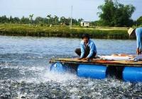 Hàng trăm sản phẩm thức ăn thủy sản lưu hành trái phép
