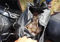 Vướng trong định giá 116 trứng vích