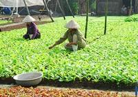 TP.HCM chỉ còn 0,02% hộ nghèo