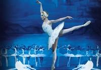 Vở ballet nổi tiếng Hồ thiên nga trở lại TP.HCM