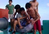 Vụ bắt cá heo rồi giết chết: Truy nhóm ngư dân để xử lý