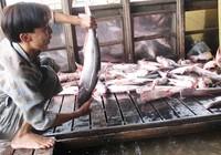 Xuất khẩu cá tra phải thu mua theo danh sách của Mỹ