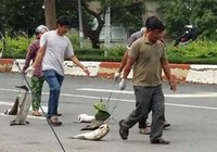 13 tỉ đồng bồi thường vụ cá chết ở Long Sơn