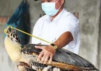 Tàng trữ 8.000 xác rùa biển, tai tượng