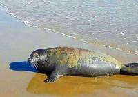 Cái chết của hải cẩu