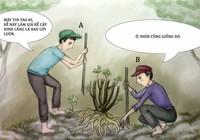 Tình huống kỳ 27: Giả rễ đinh lăng đem bán