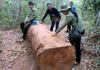 Dựng chuyện cướp gỗ: Kỷ luật cao nhất là buộc thôi việc