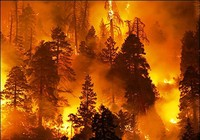 Cháy lớn ở rừng thông đặc dụng Quảng Ninh
