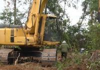 Vụ phá rừng nuôi bò: Lo ngại tẩu tán gỗ