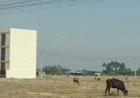 TP.HCM: Tách thửa trên 2.000 m2 phải lập dự án?