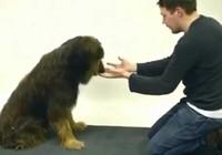 Clip:Phản ứng của những chú chó khi bị ảo thuật gia lừa
