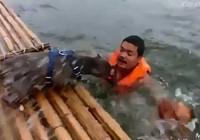 Clip: 2 chú chó hợp sức cứu chủ đang đuối nước