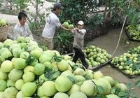 Những kiểu làm ăn 'lạ đời' của thương lái Trung Quốc