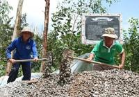 Đội cầu đường của những lão nông ngoài 60 tuổi