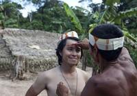 Nguyễn Tập: Từ rừng thẳm Amazon đến quê hương Bolero