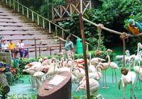 Người Singapore nhường đất cho cây xanh