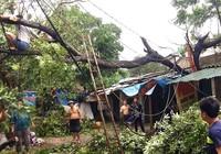 Nghệ An, Thanh Hóa tan hoang sau bão số 2