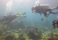Bình Thuận kiến nghị không nhận chìm xuống biển