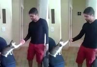Mèo đập tay cực chất với chủ