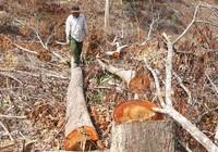 Kiến nghị xử lý quan chức tiếp tay phá rừng
